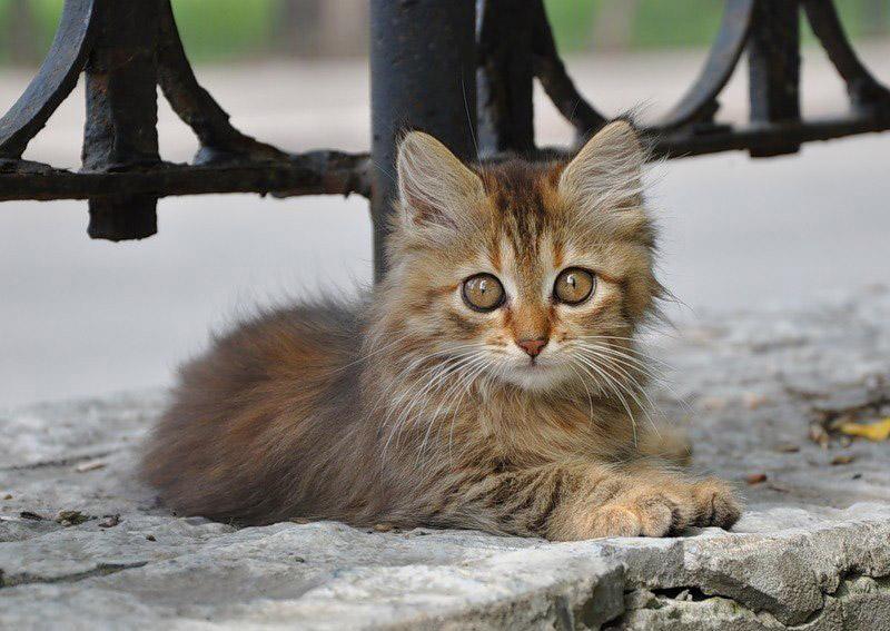 Как помочь бездомному животному, не принося его в дом?