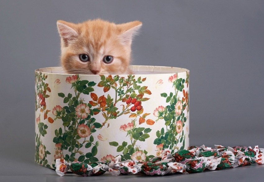 Подарки, которые никому не доставят радость